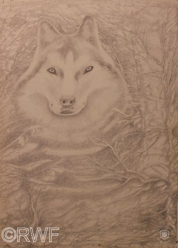 Husky by The Green Man