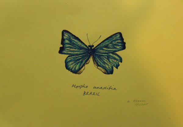 Brazilian Blue/The Butterfly one by Katie Allam