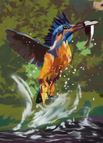kingfisher by Amanda Hamilton
