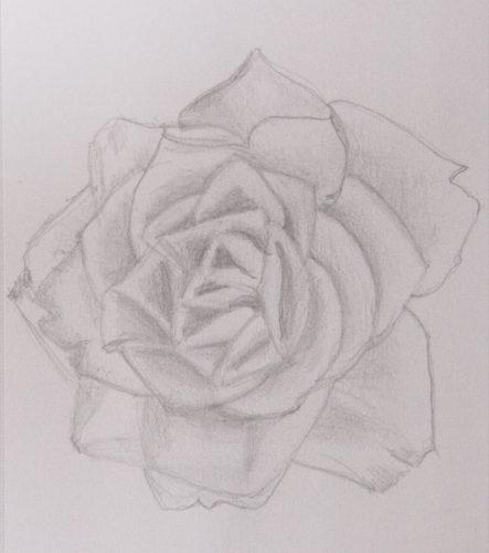 Rose 2 by Colette Evans