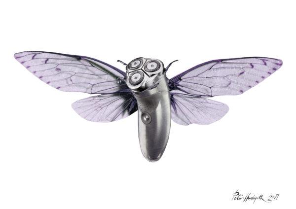 Moth by illustratorPete