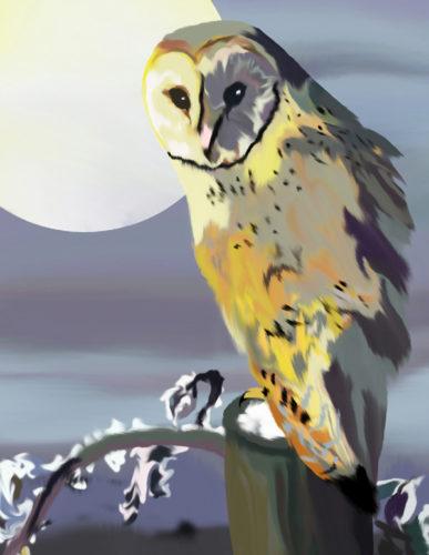 Owls Vigil by Amanda Hamilton