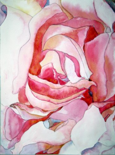Rose by Fractals Drift On