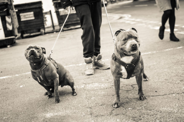 boys best friend by london rd lads.       street photography.