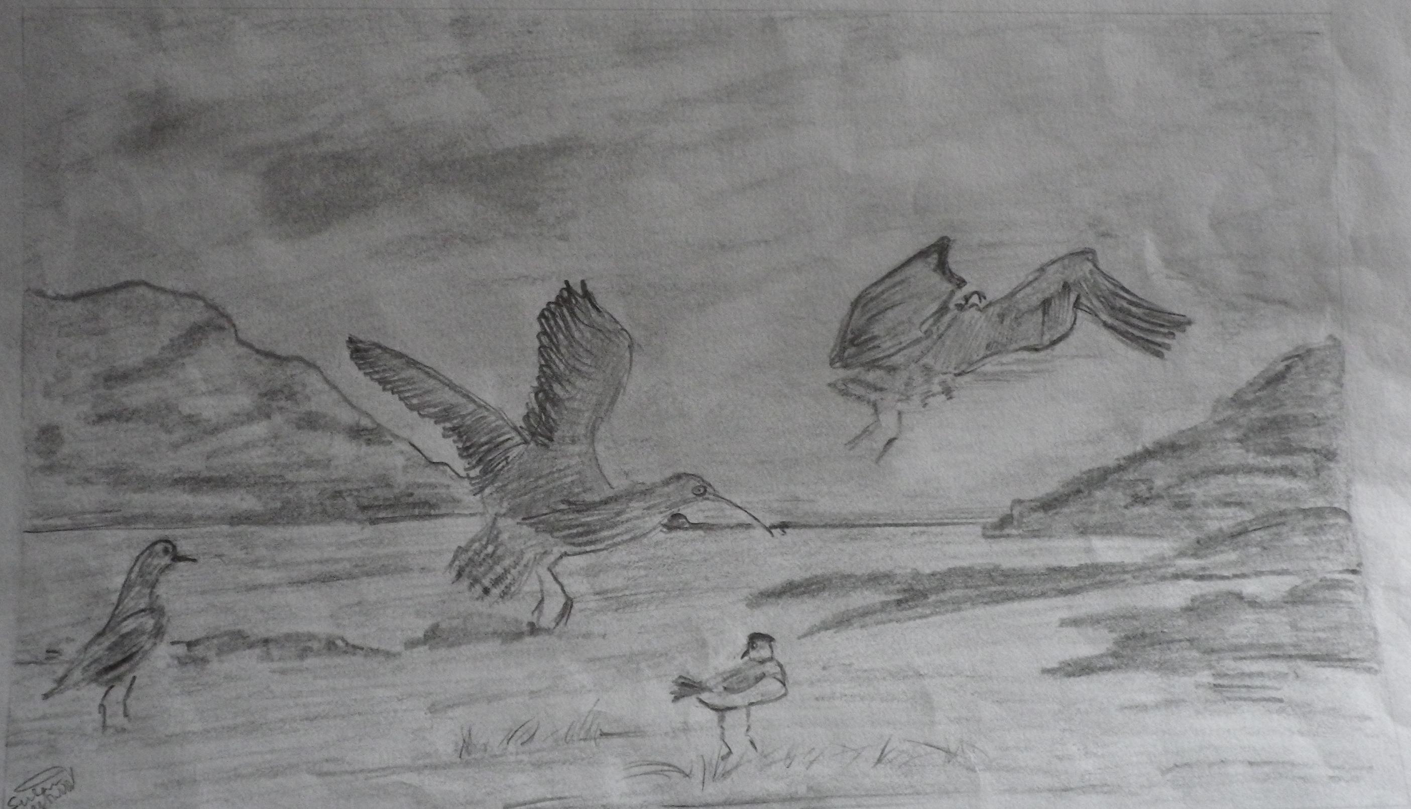 17941 || 3463 || Birds in flight along the sea front.