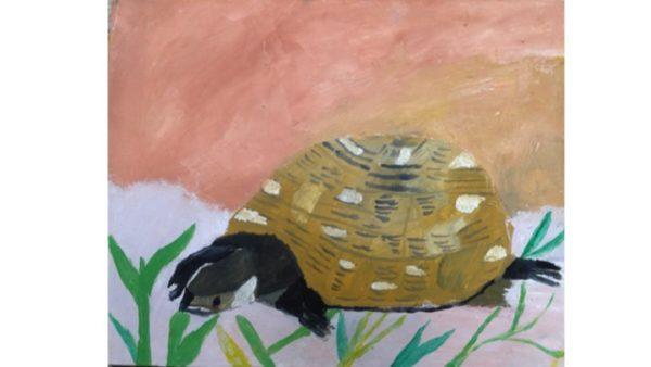 Wld Tortoise by My oil paintings