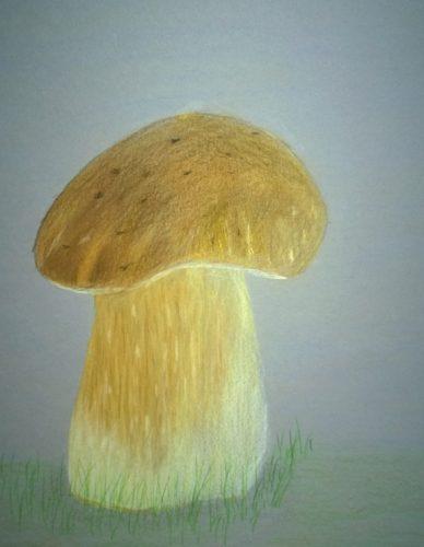 Cep Mushroom by JJ