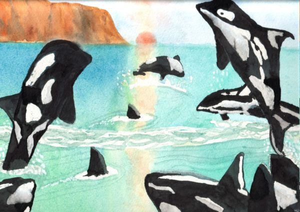 Killer Whales by Linda Slater