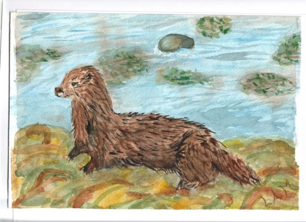 Otter by the River by Lindas fox-cub