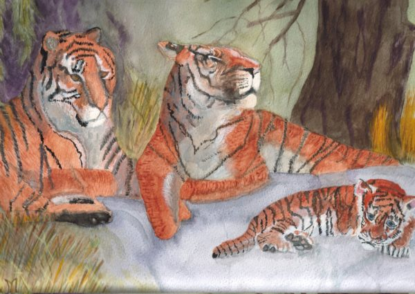 Tigers by Gareths Trans Siberian Express trip