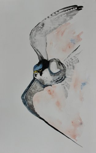 Peregrine Falcon by Whistling Ear Art