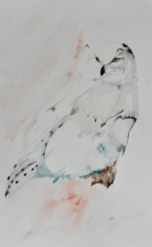 Snowy Owl by Frog on timber
