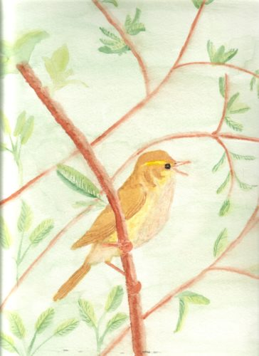 willow warbler by Linda Slater