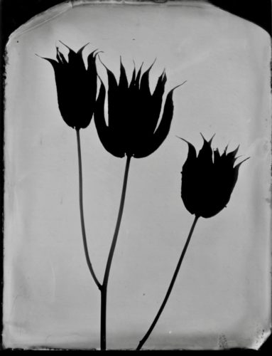 Wetplate collodion on black glass plate (Black glass Ambrotype) by Drew Fox