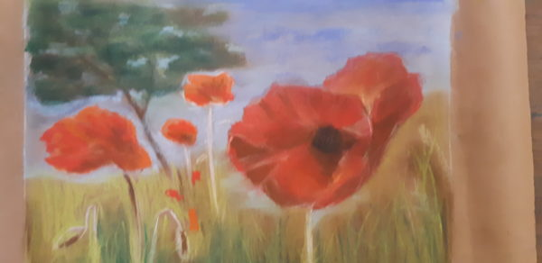 Poppies by Thomas Stimpson