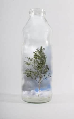 Tree in a Bottle by Amy Bell