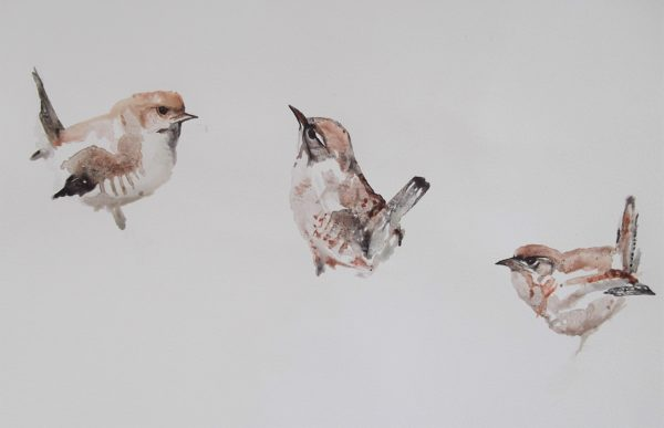 Wrens by Whistling Ear Art