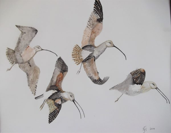 Curlews in flight by Frog on timber