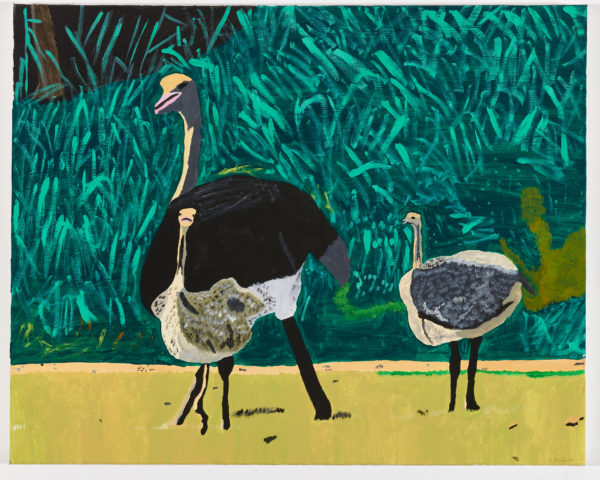 Ostriches by Ellen Prebble