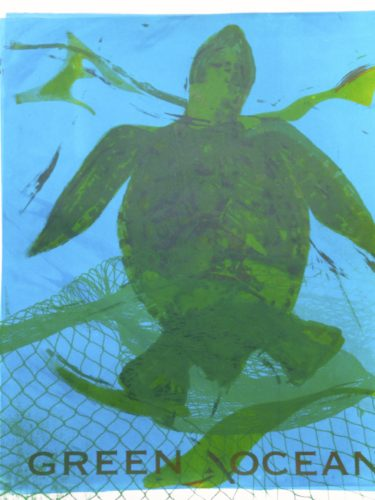 Turtle  Loggrhead caught in a Net by Mike West