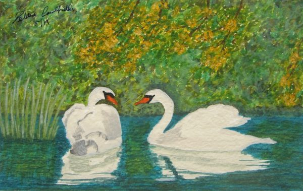 Spring Swans by Winter Ducks