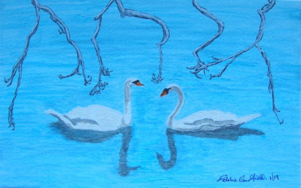 Winter Swans by Winter Ducks