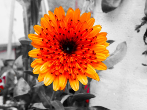 orange flower by looking out