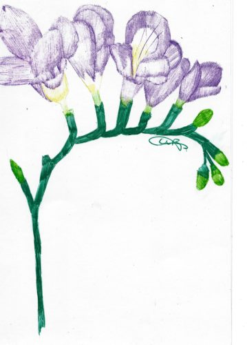 freesias.jpg by indieclairesillustrations