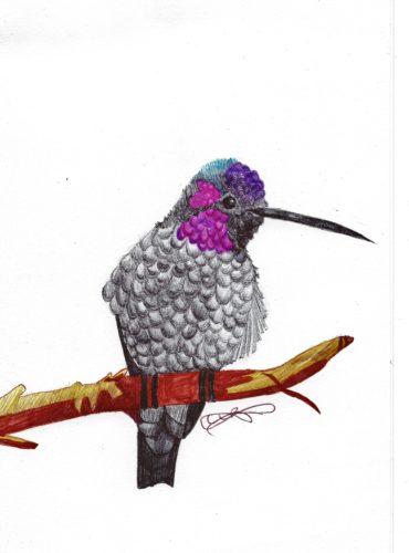 little-bird.jpg by indieclairesillustrations