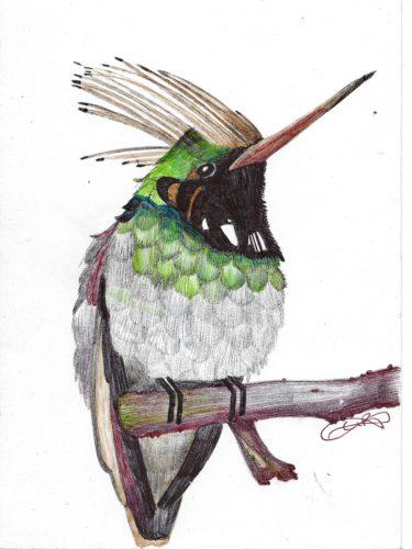 punk-hummingbird.jpg by indieclairesillustrations