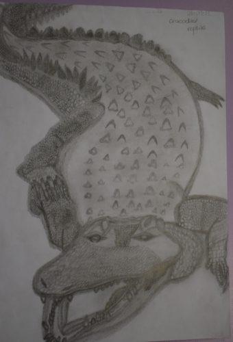 Crocodile by Melissa Hamilton