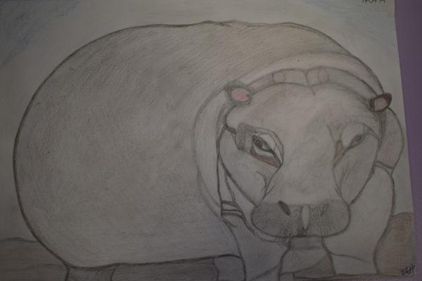 Hippo by Melissa Hamilton