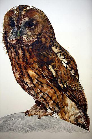 Owl.jpg by Jamie Avis