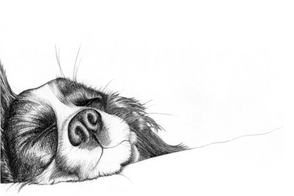 Spaniel sleeping by Sheila
