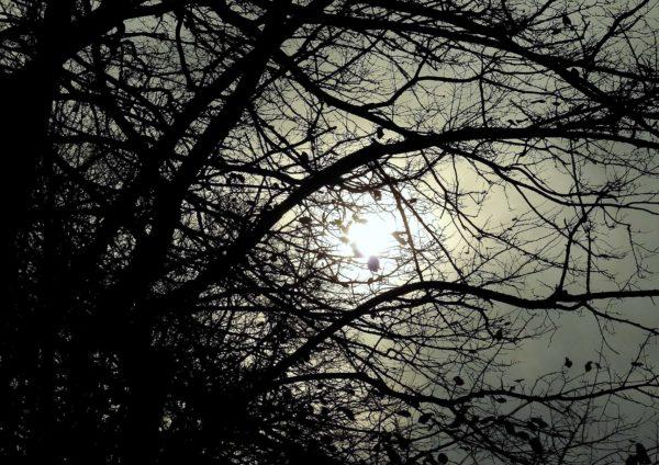 November Twilight Trees