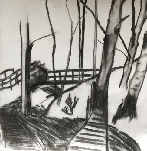 Chevin Forest by Yvette