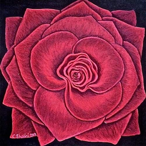 Red Rose by Chloe Shalini