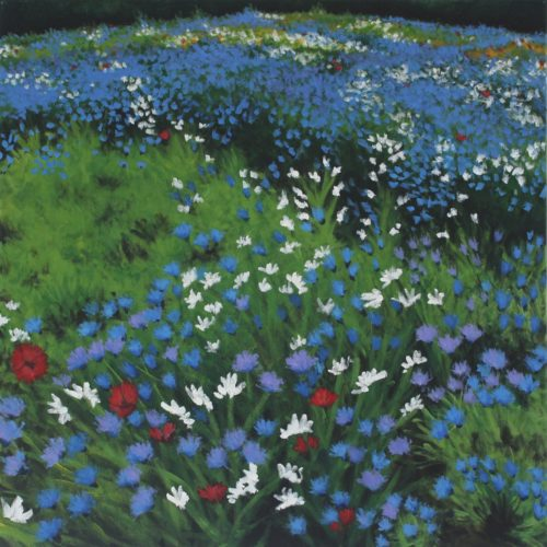 Wildflower Meadow by CLARE GRAVENELL