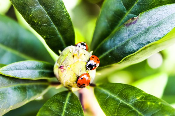 Ladybirds picnic by Emlyn William Scott