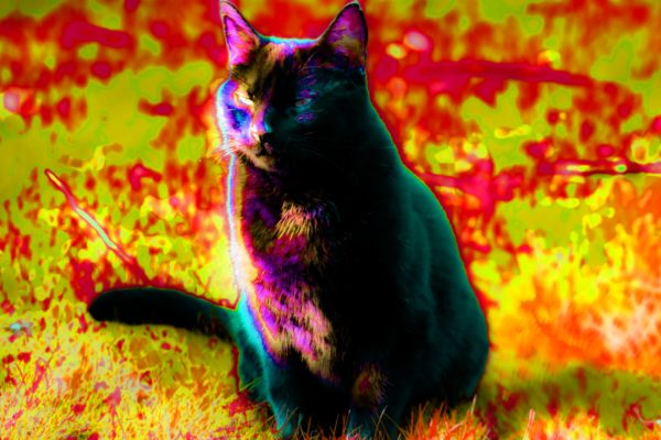 Cats are not evil by Emlyn William Scott