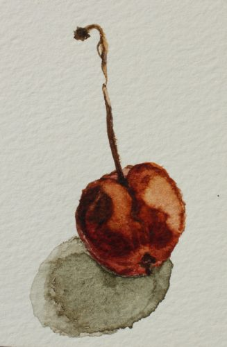 Decaying Cherry by CLARE GRAVENELL