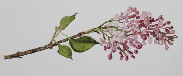Spring Lilac by CLARE GRAVENELL