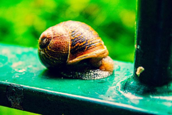 A slug with a house is a snail by Emlyn William Scott