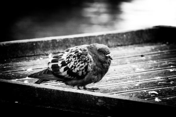 The lonely bird by Emlyn William Scott