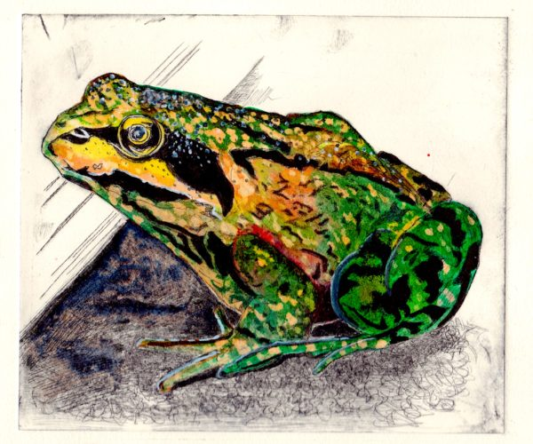 'Greenhouse Frog' by Julia Baines