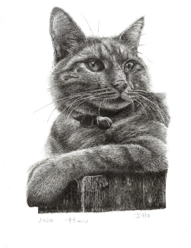 Harry Cat by Hare & Daisy