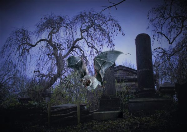 Sheffield grave yard by Julie Bingley