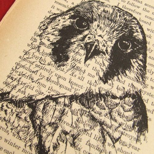 Bird Book by ruffrootcreative