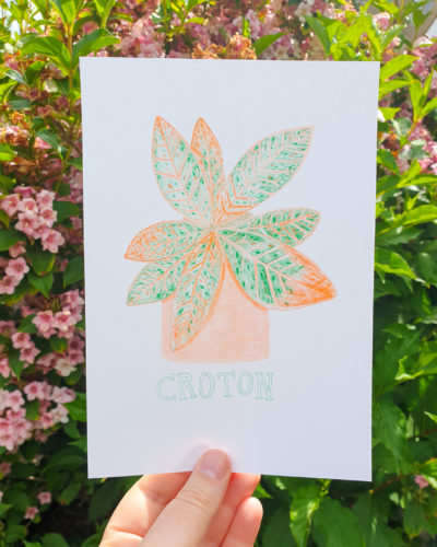 Croton by Livvy Rose Studio