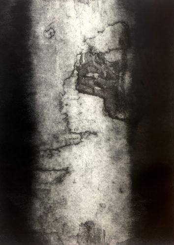 Tree 1, From '100 Trees'. by Joanna Cohn